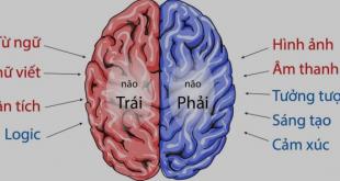 Hiểu về não của mình -   - b    n  o 310x165