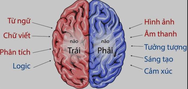 Hiểu về não của mình -   - b    n  o