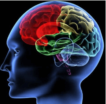 Hiểu về não của mình -   - ch   t n  o