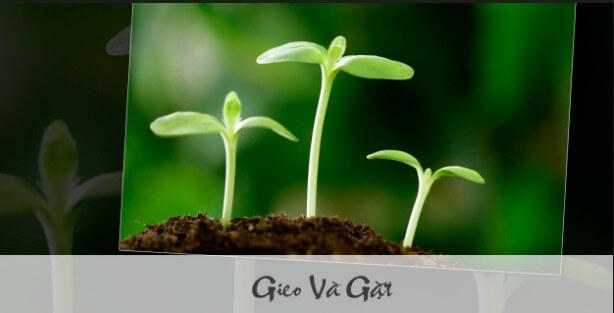 Hãy làm những gì bạn có thể với tất cả những gì bạn đang có!