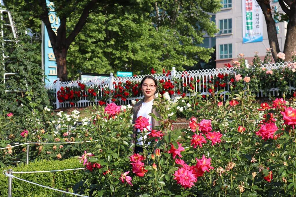 Cho một mùa hè thật xanh -  mùa hè hàn quốc - M  a hoa h   ng H  n Qu   c bich khoa 1024x683