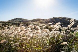 Mùa thu Hàn Quốc, mùa cỏ lau đẹp mơ màng như xứ thần tiên -  mùa thu hàn quốc - hanquoc n  i c    lau bichkhoa blog 310x205