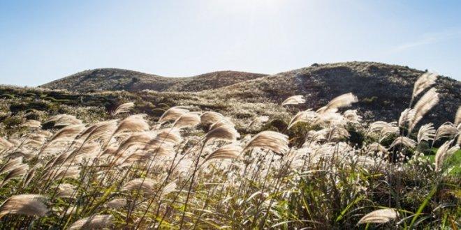 Mùa thu Hàn Quốc, mùa cỏ lau đẹp mơ màng như xứ thần tiên -  mùa thu hàn quốc - hanquoc n  i c    lau bichkhoa blog 660x330